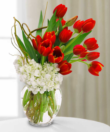 Tulips for Love